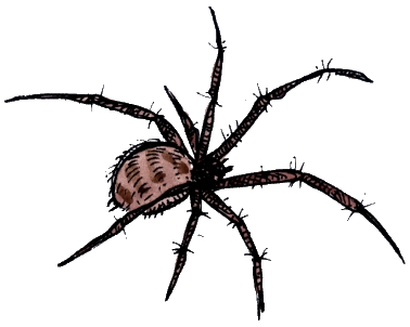 Hairy spider from Trick or Treat